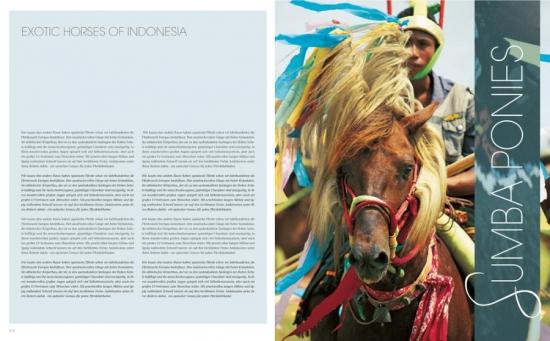 Pferde Weltweit - Indonesische Ponies