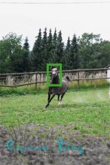 equine_blog_pferdefotografie_halbnahe