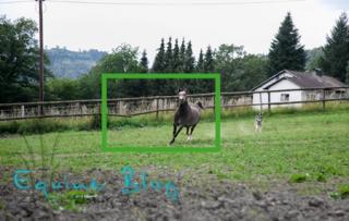 equine_blog_pferdefotografie_halbtotale