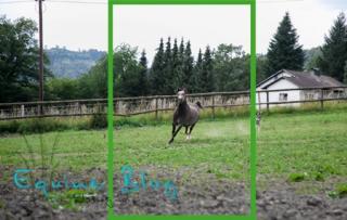 equine_blog_pferdefotografie_hochformat
