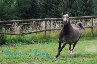 equine_blog_pferdefotografie_in_bewegung