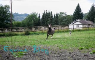 equine_blog_pferdefotografie_in_umgebung
