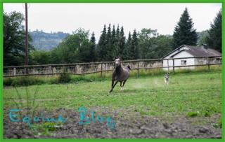 equine_blog_pferdefotografie_querformat