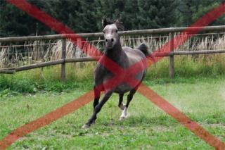 equine_blog_pferdefotografie_so_nicht_1