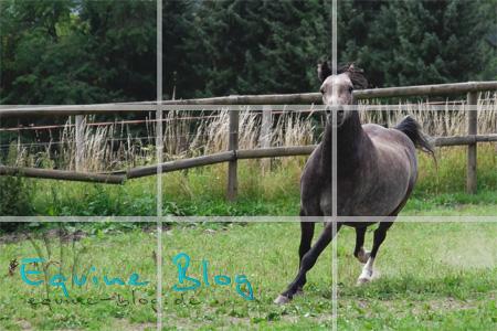 equine_blog_pferdefotografie_drittel