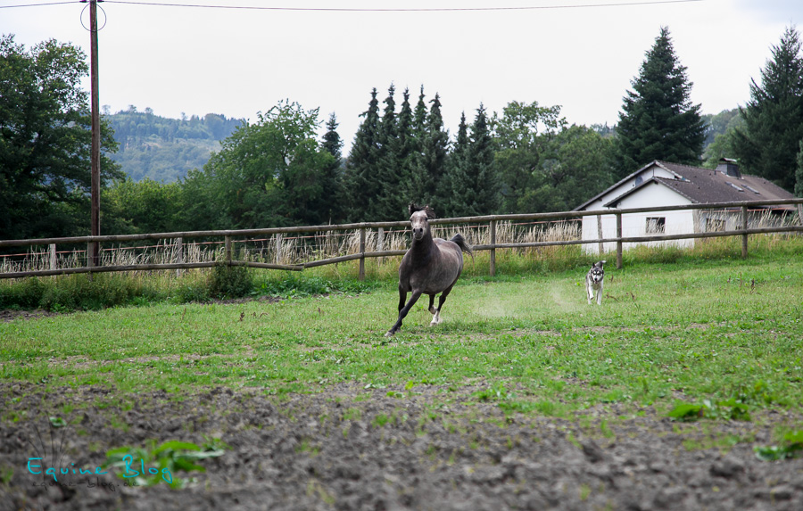 unbenannt_equine-blog_stallshooting20110716_0124-bearbeitet
