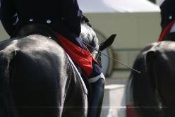 Equine Blog | Foto: Romina Ronzon