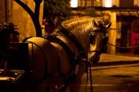 Pferdekutsche in Sevilla | Foto: Romina Ronzon