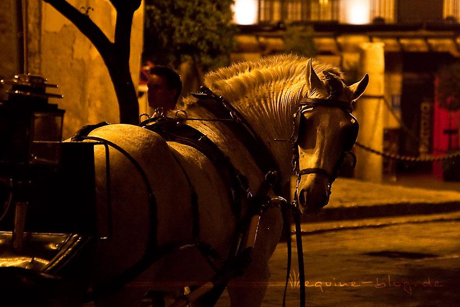pferd satteldruck muskelverspannung