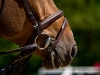 Pferdegeflüster | Foto: Romina Ronzon